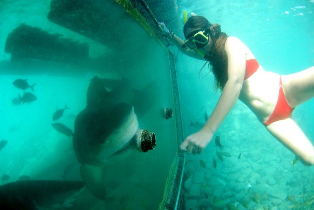 haaien curacao