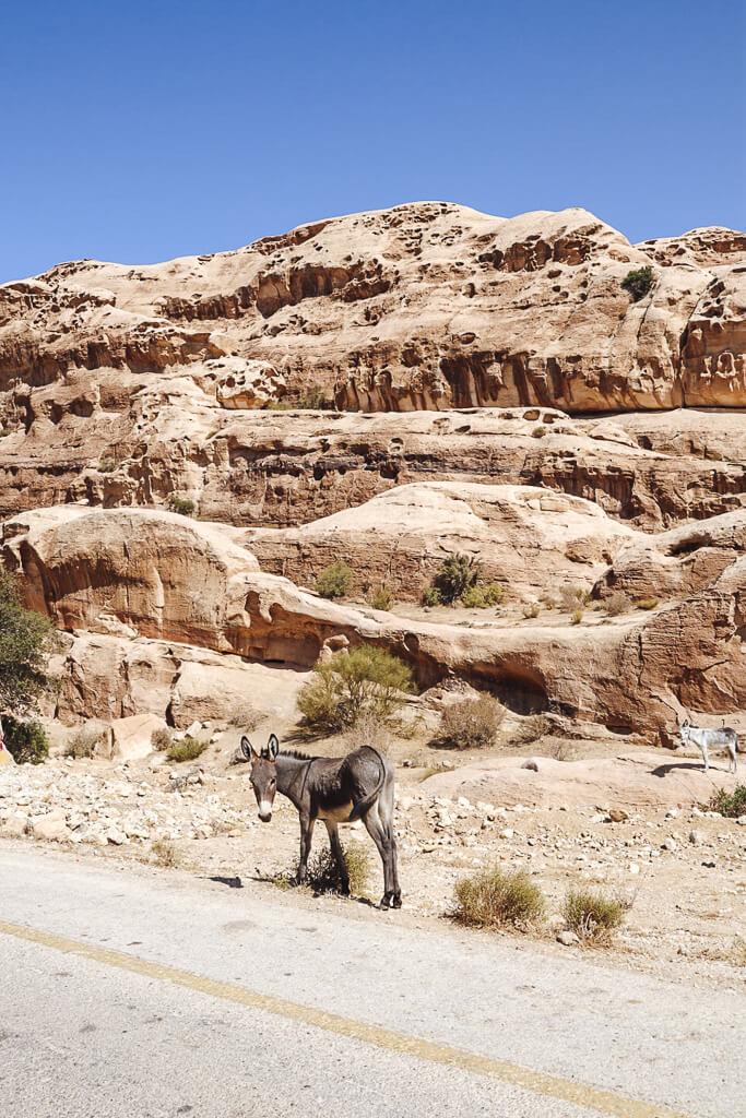 autorijden jordanie kings highway