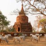 Myanmar route: in vier weken langs de hoogtepunten!