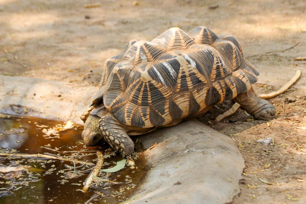 bedreigde schildpadden myanmar