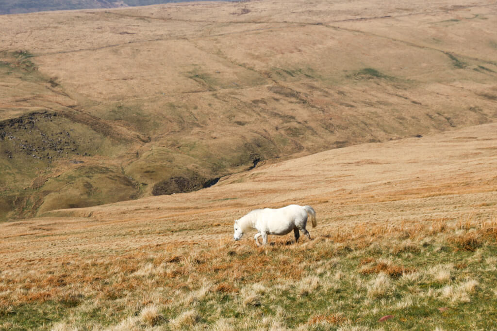 brecon beacons auto