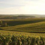 TRAVEL BUG: Tour Du Champagne