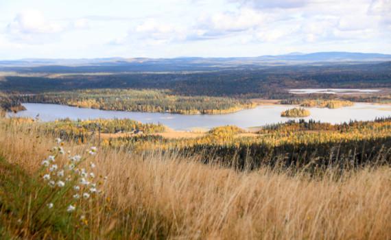 Fins Lapland zonder sneeuw