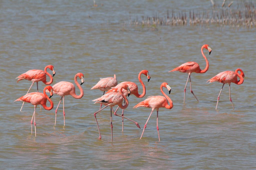 flamingo mexico