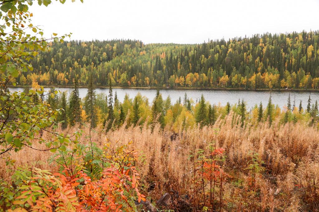 herfst in fins lapland ruska