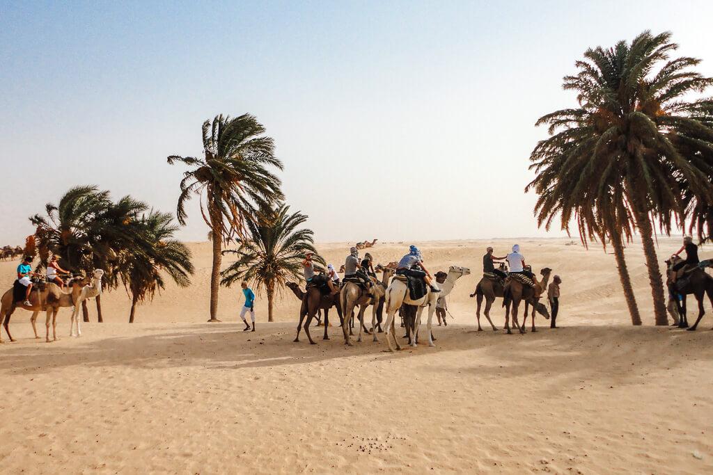 kameel rijden tunesie