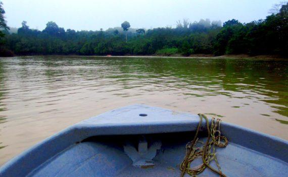 orang oetans kijken rivier borneo Kinabatangan