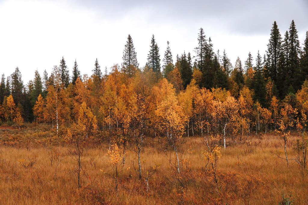 lapland herfst