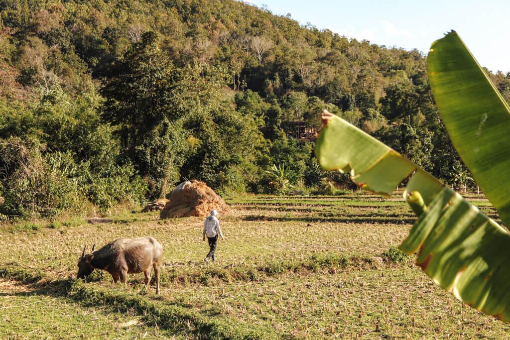 thailand van de gebaande paden