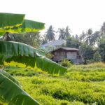 Op reis naar Thailand of Bali? Ik help je kiezen!