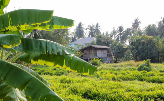 thailand of bali
