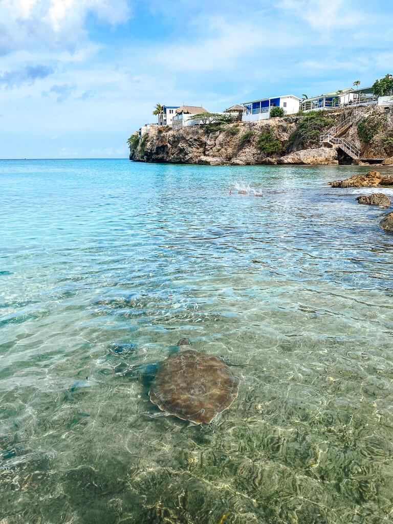schildpadden strand curacao