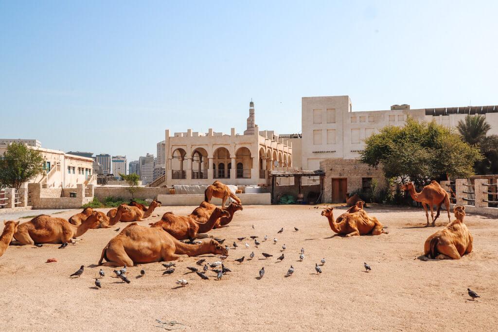 stedentrip doha qatar