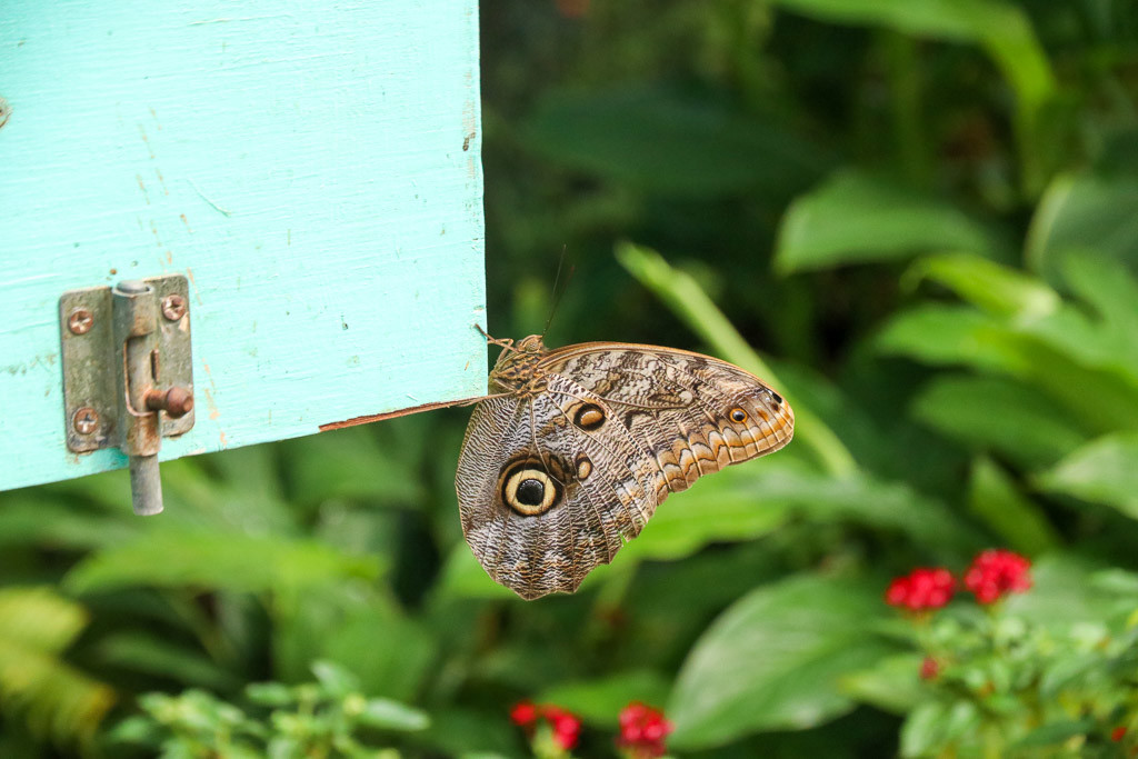 vlindertuin aruba
