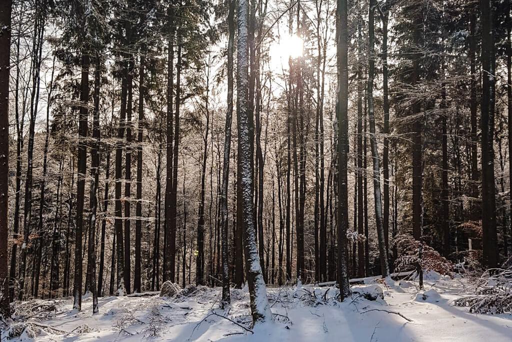 winterberg 2019